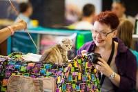 """Выставка """"Пряничные кошки"""". 15-16 августа 2015 года., Фото: 84"""