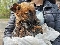 Туляки спасли погибавших в битуме щенков, Фото: 20