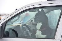 Праздник северных собак на Куликовом поле , Фото: 41