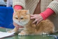 Выставка кошек в Туле, Фото: 38