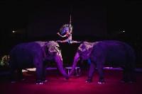 «Шоу Слонов» в Тульском цирке, Фото: 26