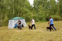 Выставка охотничьих собак под Тулой, Фото: 101