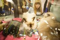"""Выставка """"Пряничные кошки"""". 15-16 августа 2015 года., Фото: 124"""