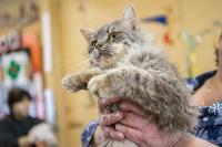 Волонтеры спасли кошек из адской квартиры, Фото: 56