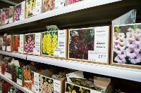 Какие семена выбрать и как правильно ухаживать за рассадой, Фото: 60