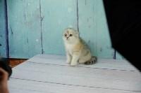 Выставка кошек в Искре, Фото: 7