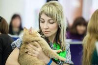 Международная выставка кошек. 16-17 апреля 2016 года, Фото: 23