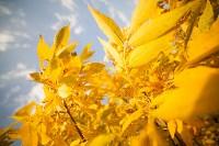 Золотая осень в Тульской области, Фото: 29