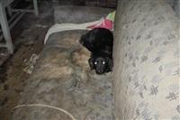 Похищенные собаки, Фото: 18