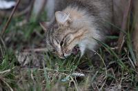 Тульские котики, Фото: 36