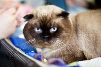Выставка кошек. 4 и 5 апреля 2015 года в ГКЗ., Фото: 146