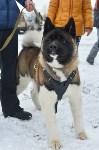 Праздник северных собак на Куликовом поле , Фото: 37