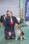 Выставка собак в Туле 26.01, Фото: 78