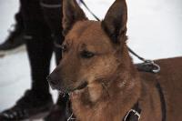 Тульским собаководам разъяснили правила выгула собак, Фото: 3