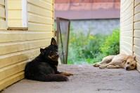 Собаки на тульской метеостанции, Фото: 11