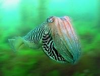 Победитель в категории «Британские воды» — «Каракатицы в тумане»., Фото: 9