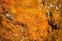 Золотая осень в Туле-2019, Фото: 94