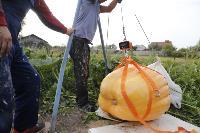 Гигантские тыквы из урожая семьи Колтыковых, Фото: 34