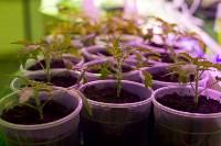 Леруа Мерлен: Какие выбрать семена и правильно ухаживать за рассадой?, Фото: 11
