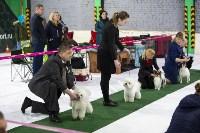Выставка собак в Туле 14.04.19, Фото: 4