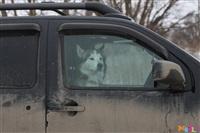 Куликово поле. Гонки на собачьих упряжках., Фото: 128