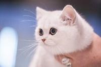 Выставка кошек в МАКСИ, Фото: 80