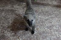 трогательный зоопарк, Фото: 34
