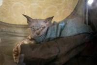 Пряничные кошки, Фото: 44