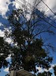 В Туле гибнут деревья, Фото: 20