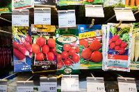 Какие семена выбрать и как правильно ухаживать за рассадой, Фото: 33