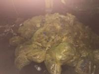 В Туле сжигают медицинские отходы класса Б, Фото: 1