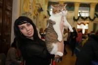 Выставка кошек. 21.12.2014, Фото: 21