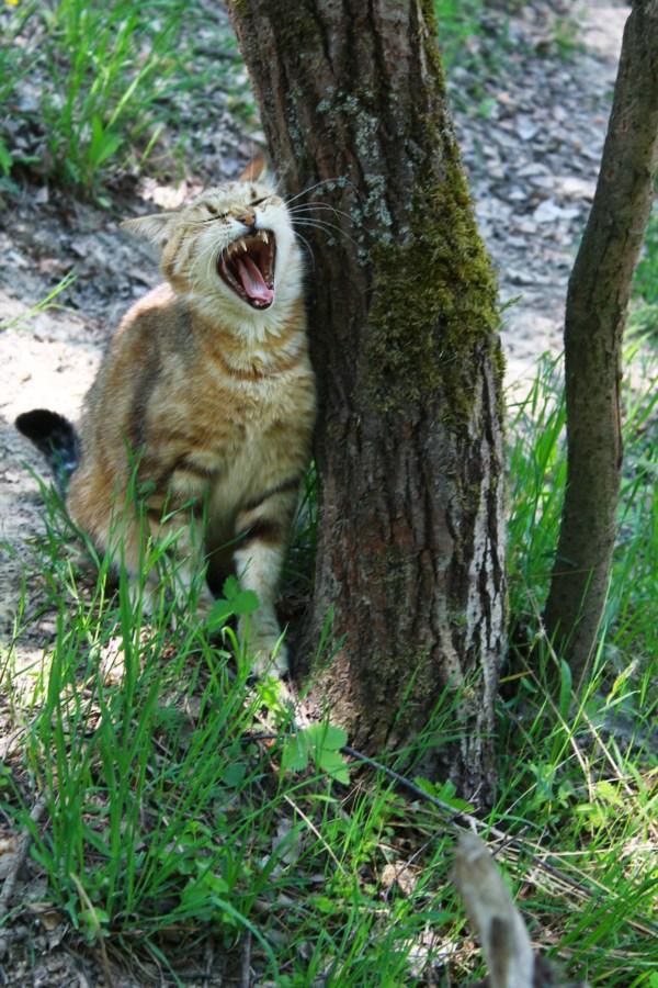 Дикий кот на природе