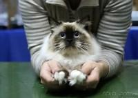Выставка кошек, Фото: 4