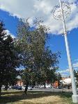 В Туле гибнут деревья, Фото: 3