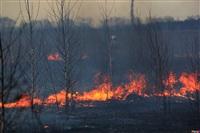Сразу в нескольких районах Тульской области загорелись поля, Фото: 5