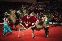 «Шоу Слонов» в Тульском цирке, Фото: 10