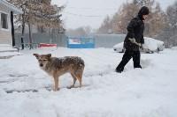 Снежная Тула. 15 ноября 2015, Фото: 11