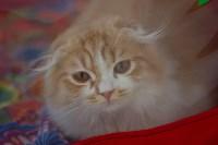 Выставка кошек в ГКЗ. 26 марта 2016 года, Фото: 90