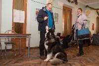 Выставка собак в Туле, 29.11.2015, Фото: 117
