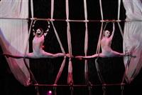 В Тульском цирке прошла премьера аква-шоу, Фото: 38