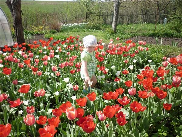 Моя Варенька на поляне тюльпанов