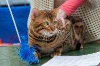 Выставка кошек в Туле, Фото: 27