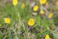 Краски весны в Туле, Фото: 42
