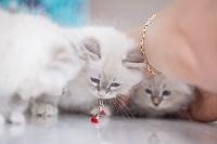 """Выставка """"Пряничные кошки"""". 15-16 августа 2015 года., Фото: 61"""