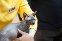 В Туле прошла выставка «Пряничные кошки» , Фото: 119