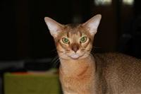 В Туле прошла международная выставка кошек, Фото: 19