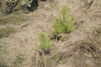 посадка леса в Одоевском лесничестве, Фото: 7