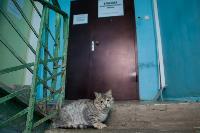 Тульские котики, Фото: 45
