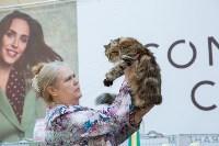 Выставка кошек в Туле, Фото: 81